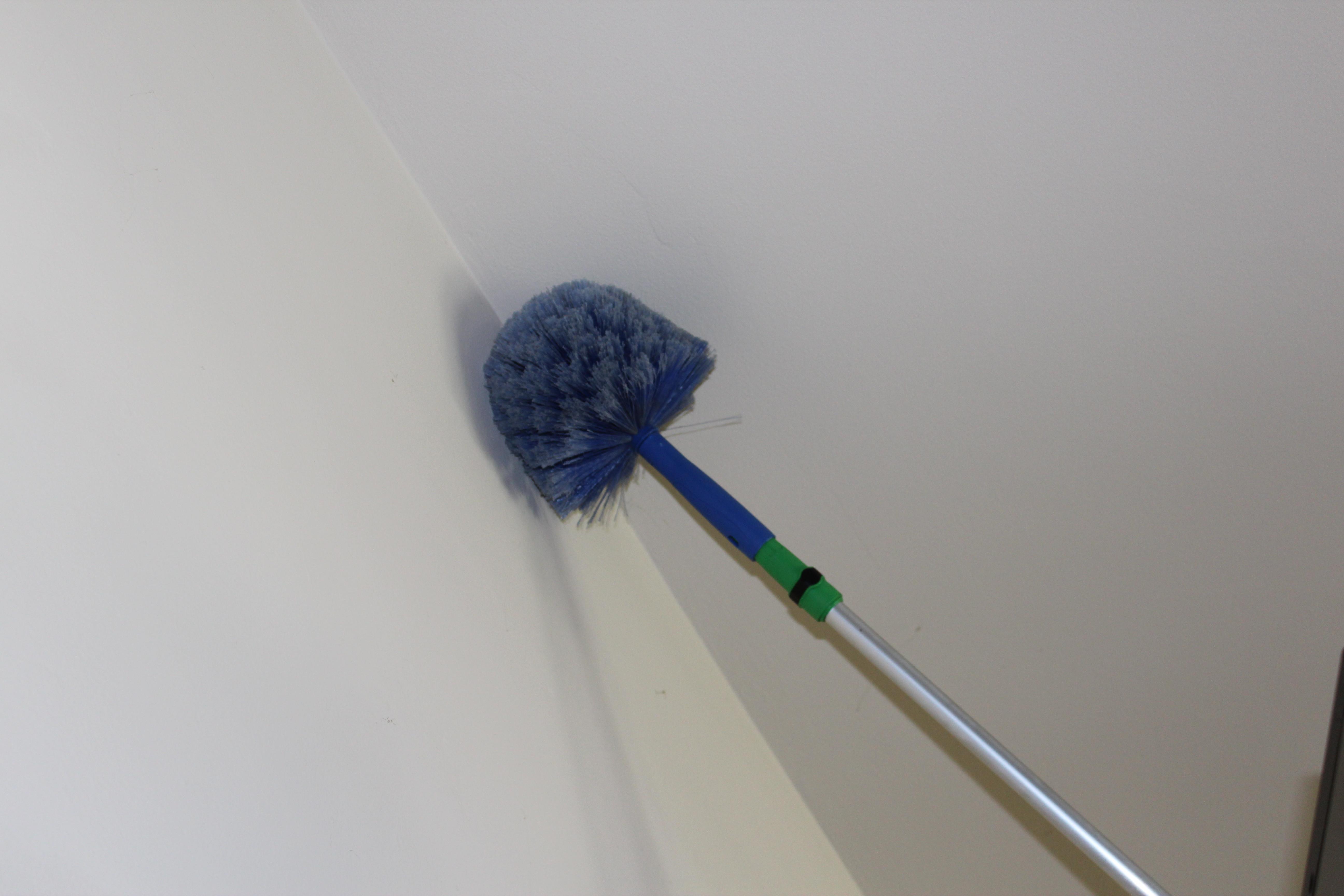 Cobweb Removal