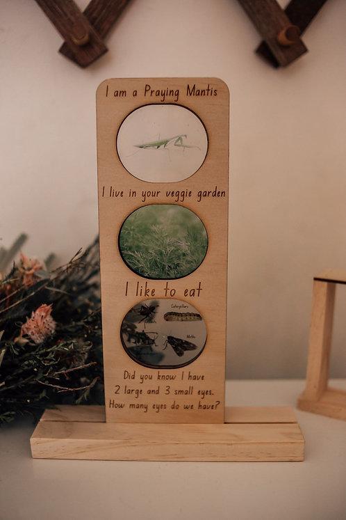 In The Garden - Praying Mantis