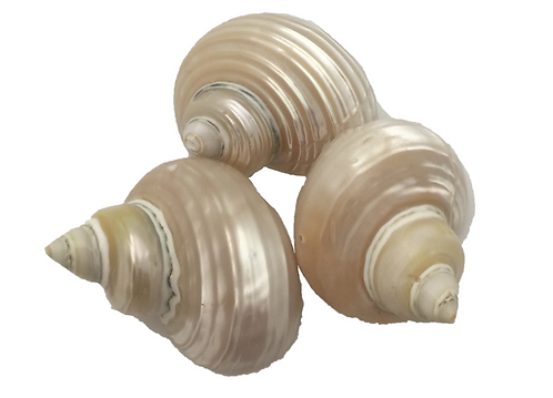 Telempu Shell 5 Piece