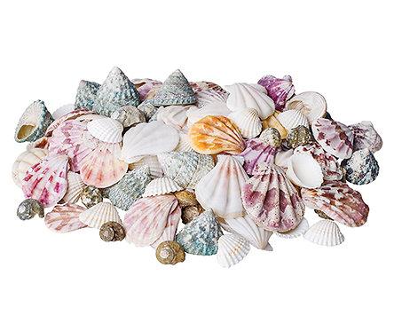 Sea Shells 700g