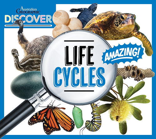 Discover: Life Cycles (Paperback)