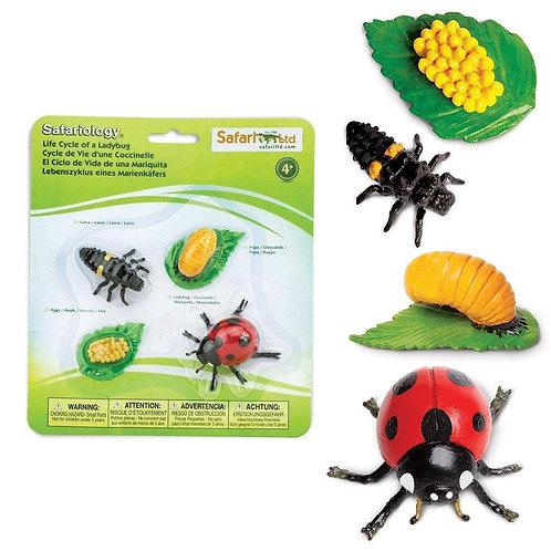 Life Cycle of a Ladybug Montessori Language Figurines Collection
