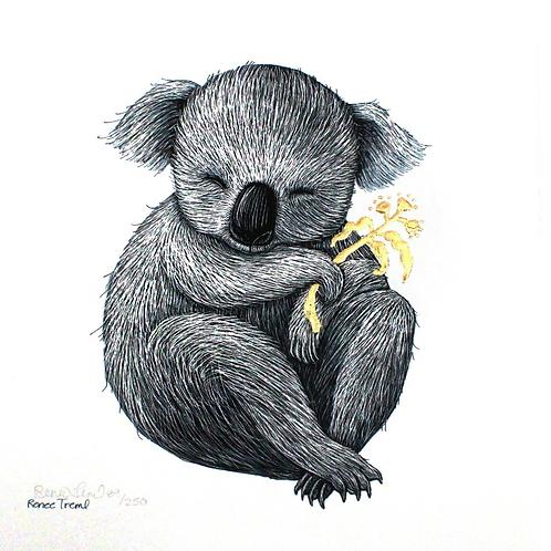Gold: Koala Fine Art Print