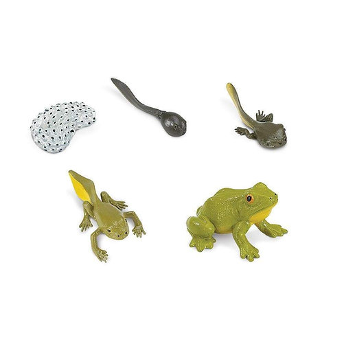 Life Cycle of a Frog Montessori Language Figurines Collection