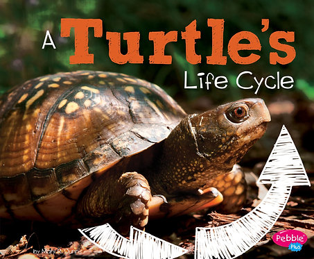 A Turtle's Life Cycle (Explore Life Cycles) Paperback