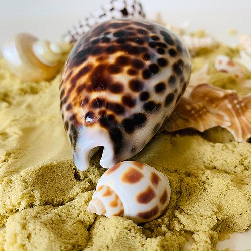 Natural Large Kowok Shell 1 Piece