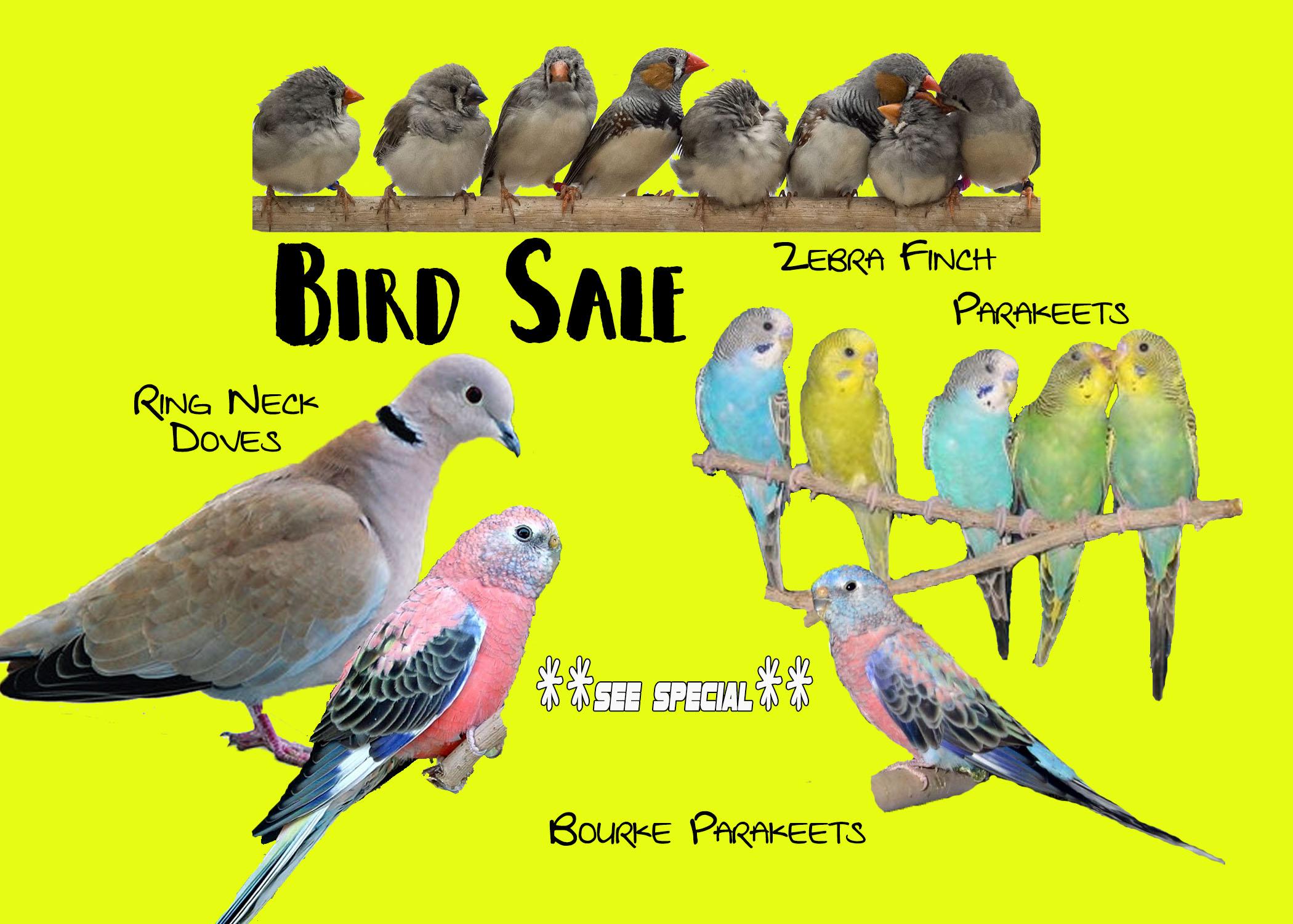Bird Special