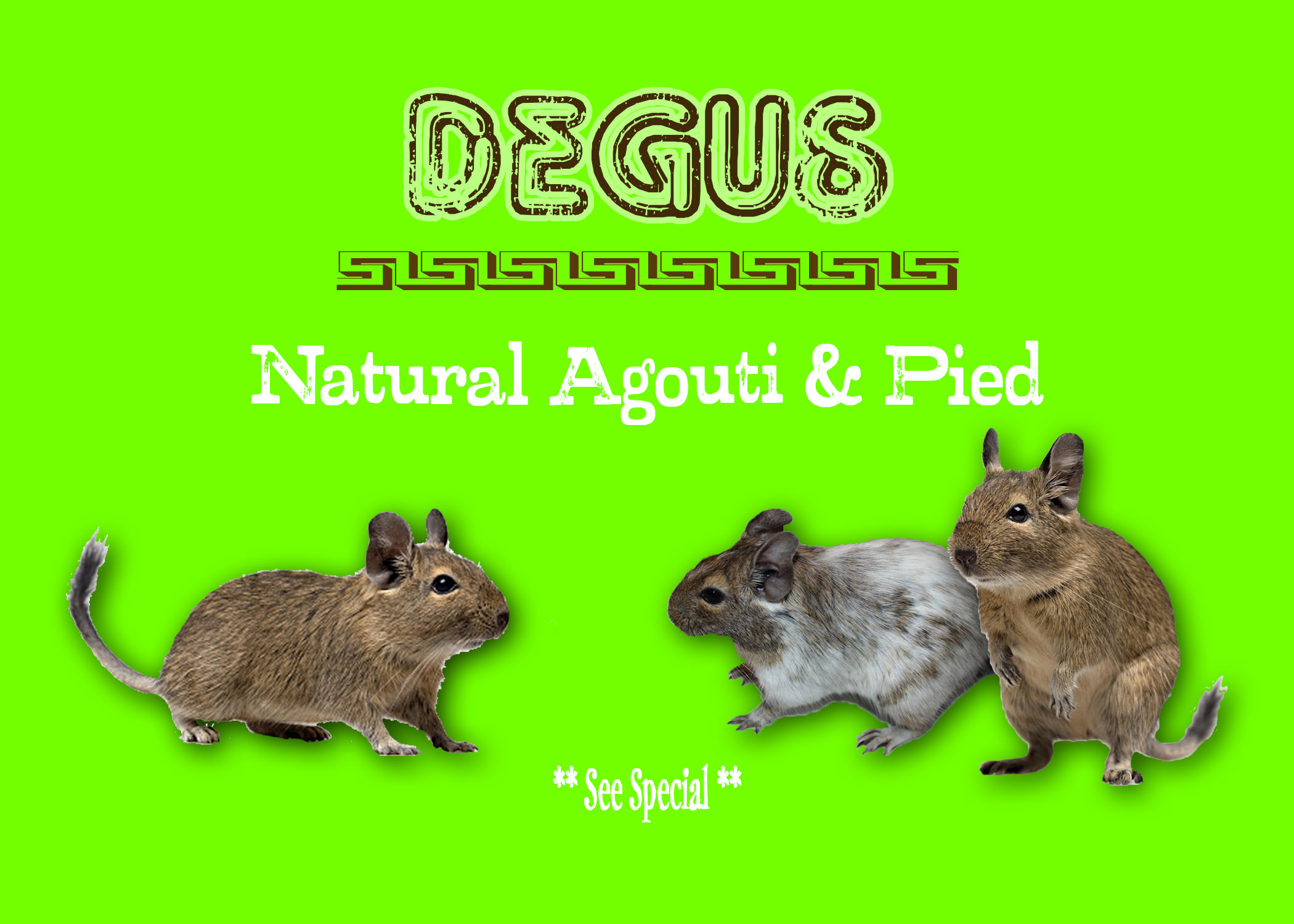 Degus Special