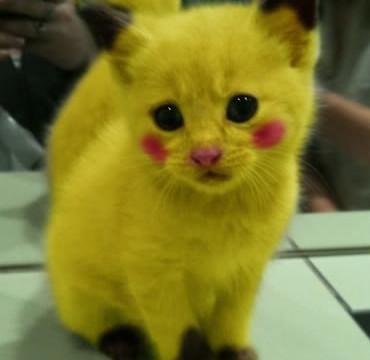 Pikachu Kitty