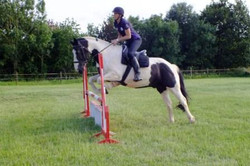 Donkey Jumping with Ellie
