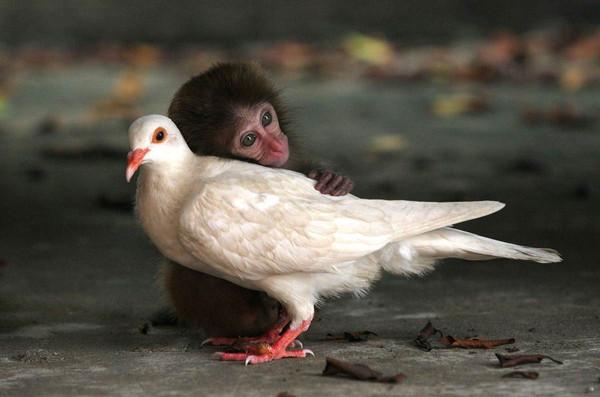 Cuddle Friends