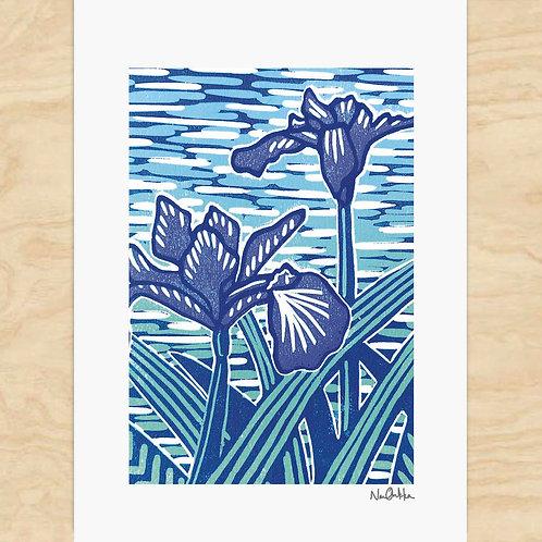 Blue Iris Cards (6)