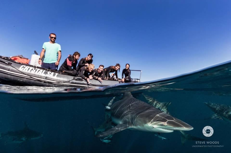 baited shark dive - aliwal shoal, south africa