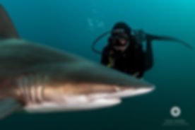 Baited Shark Diving - Crystal Divers