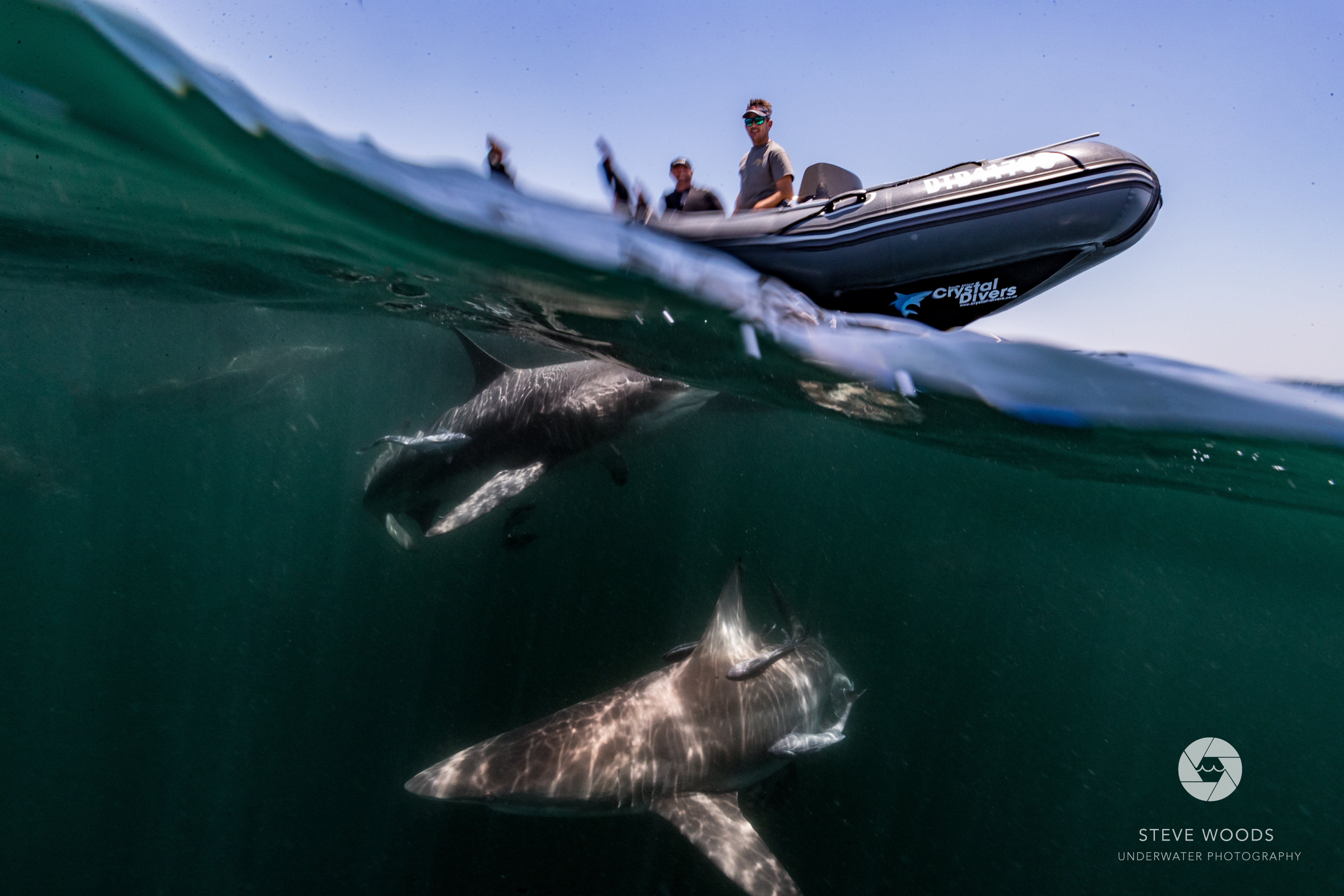 baited shark diving- aliwal shoal, south africa