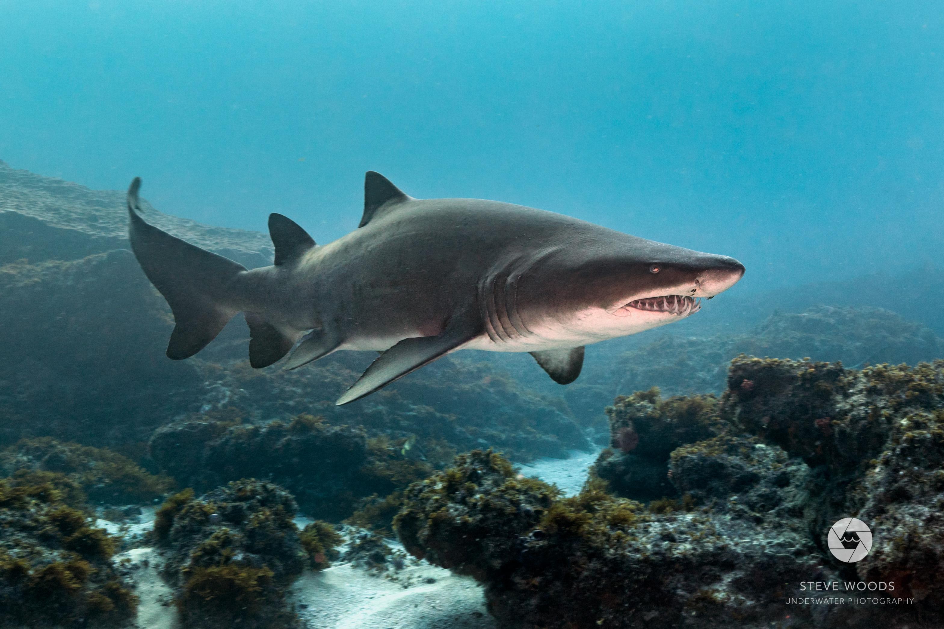 scuba diving - aliwal shoal, south africa