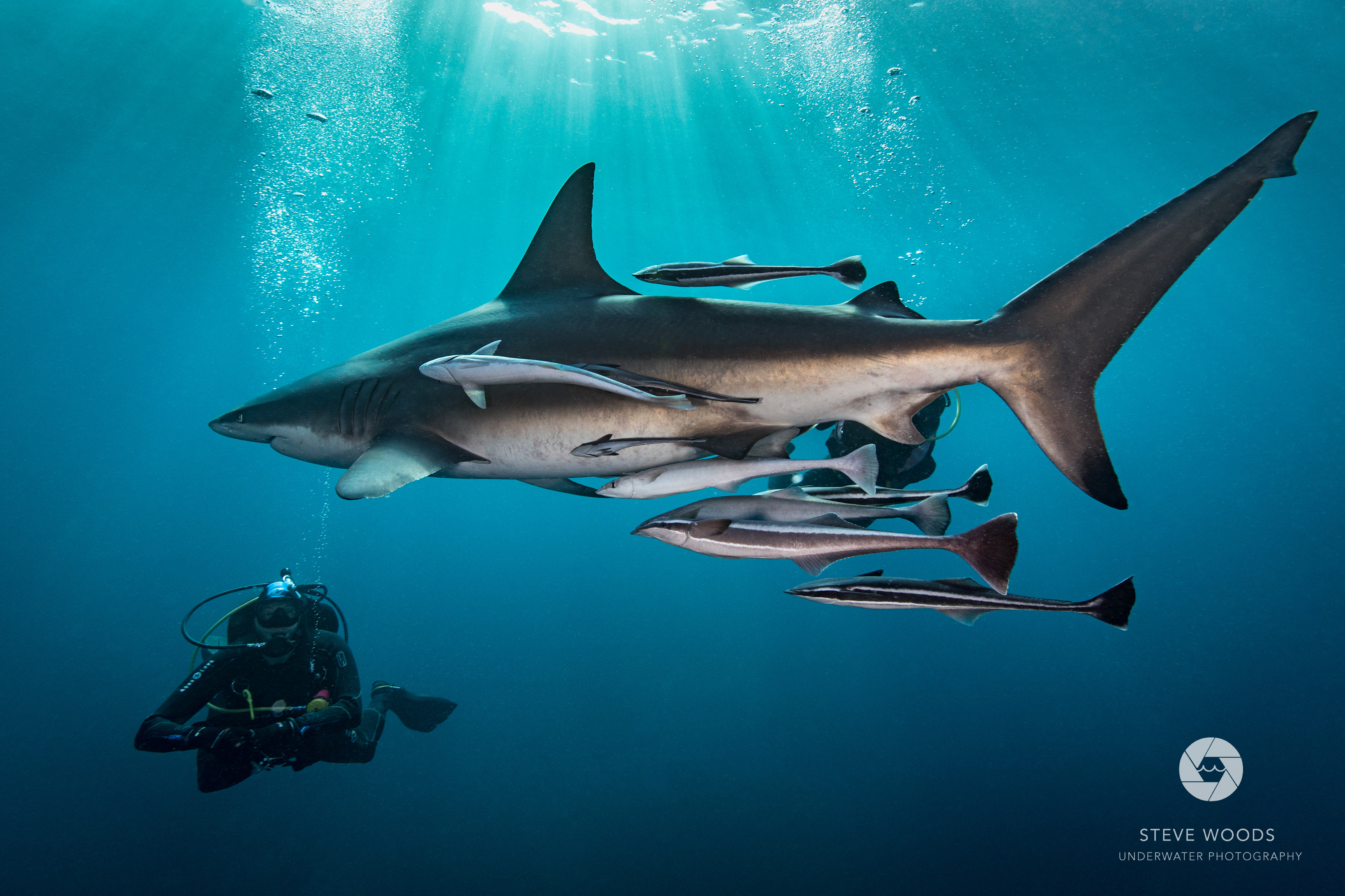 baited shark diving - aliwal shoal, south africa