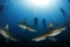 Gap Year - Shark Conservation Internship , South Africa