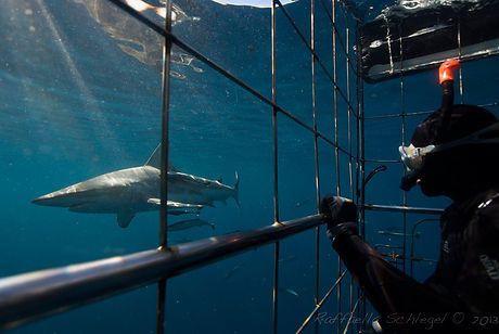 Shark Cage Diving - Crystal Divers