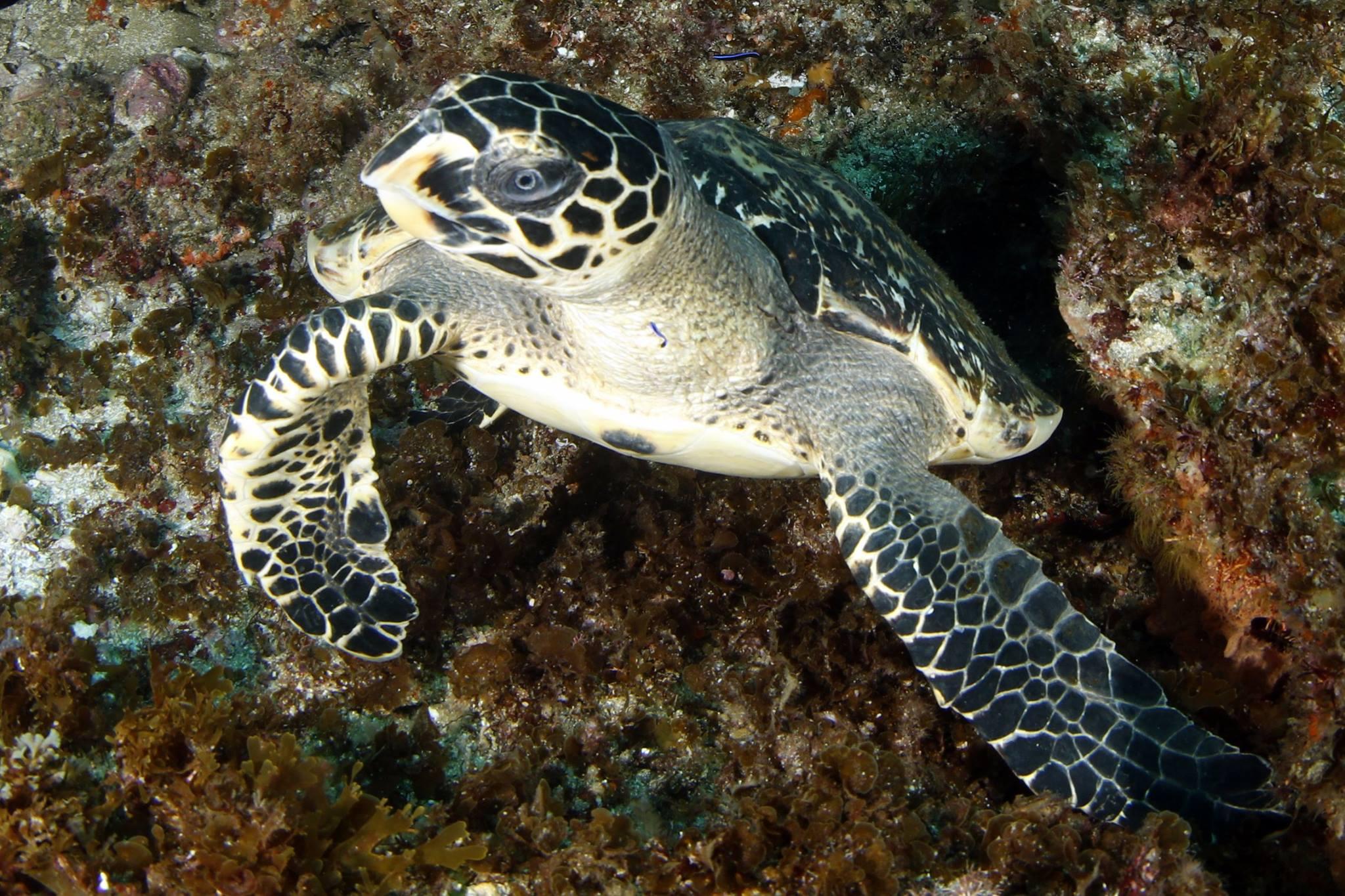scuba diving aliwal shoal - south africa