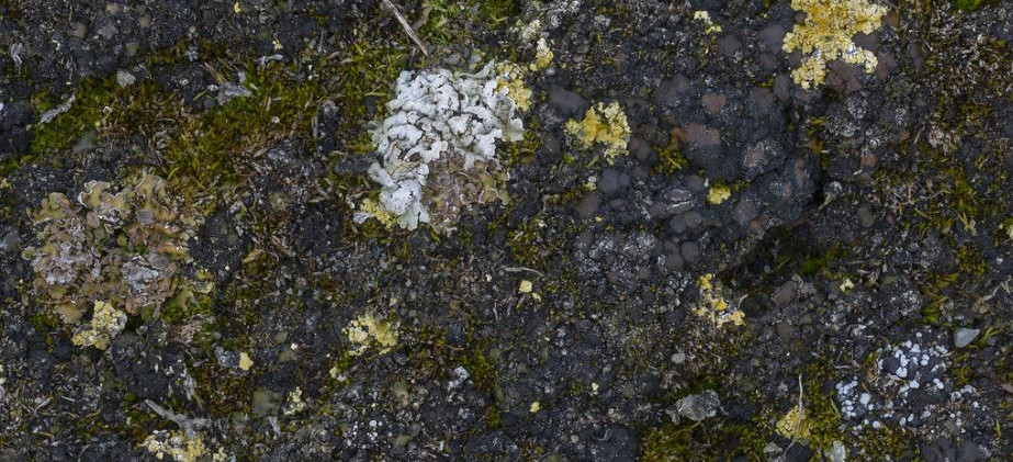 Calcareous Soil