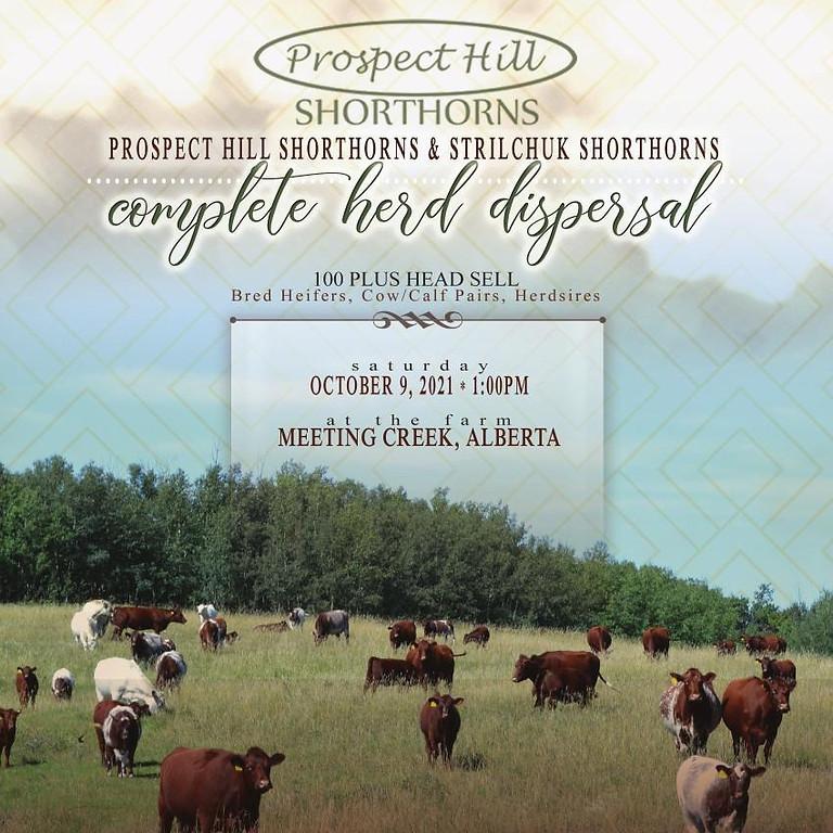 Prospect Hill & Strilchuk Shorthorns Complete Dispersal Sale