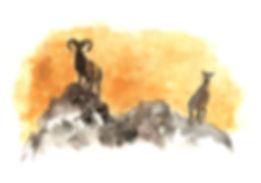 mouflon2.jpg