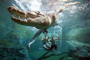 121722- Crocosaurus Cove, Darwin City -S
