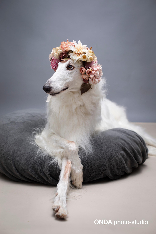 愛犬photo