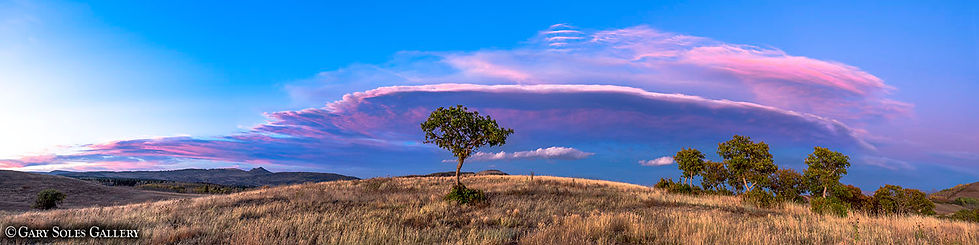 The Sentinel, pink sunset, lone tree, gaurdian, colorado summer sky
