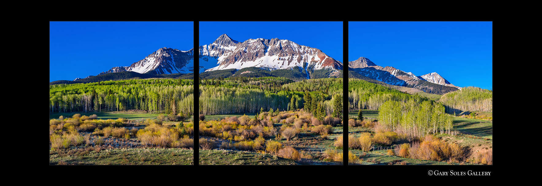 Mt Wilson Spring Triptych
