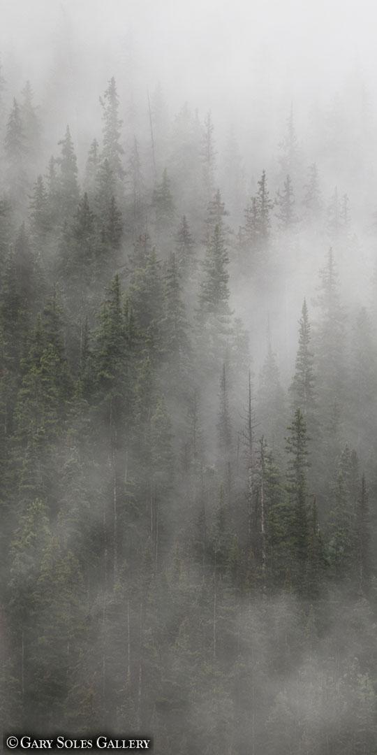 Misty Pines Vertical