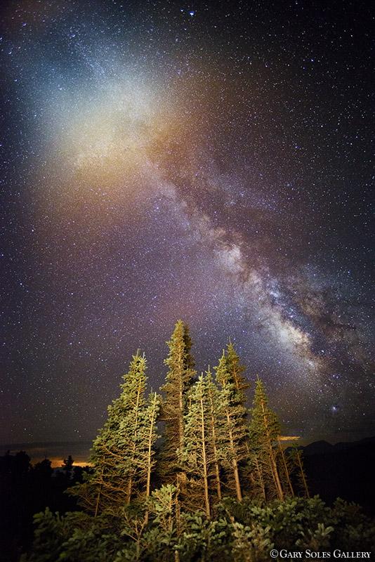 Milky Way Pines