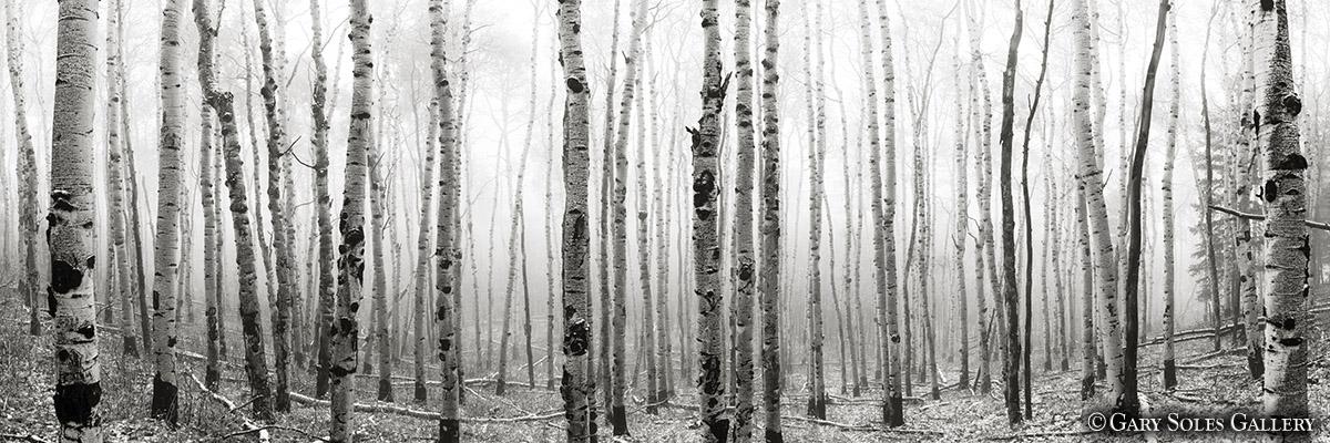 Autumn Fog BW