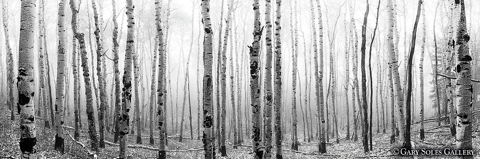 Autumn Fog BW 1_3 web.jpg