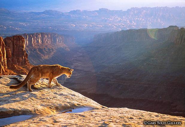 Mtn Lion Overlook