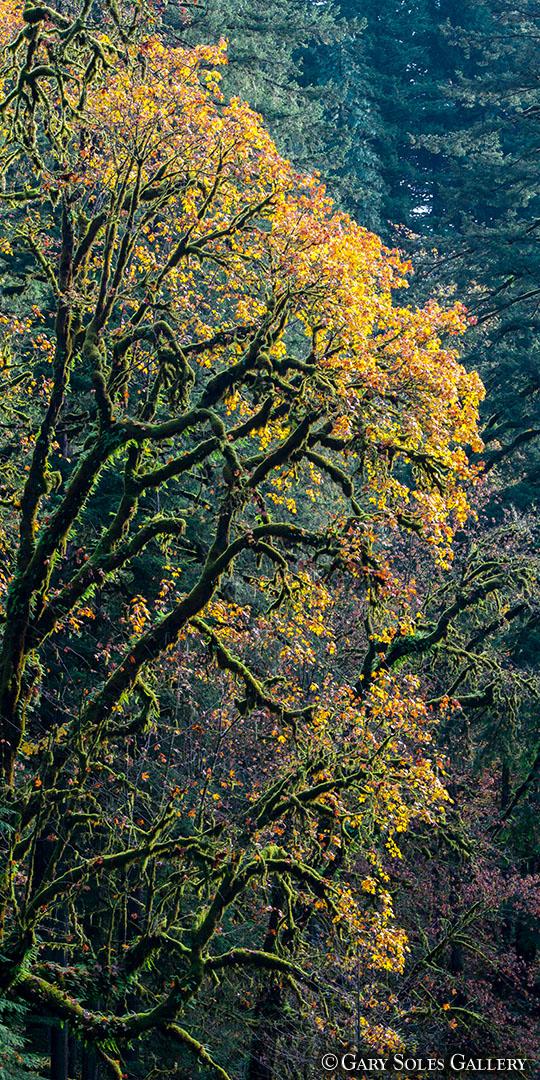 Oregon Columbia River Gorge V1-2