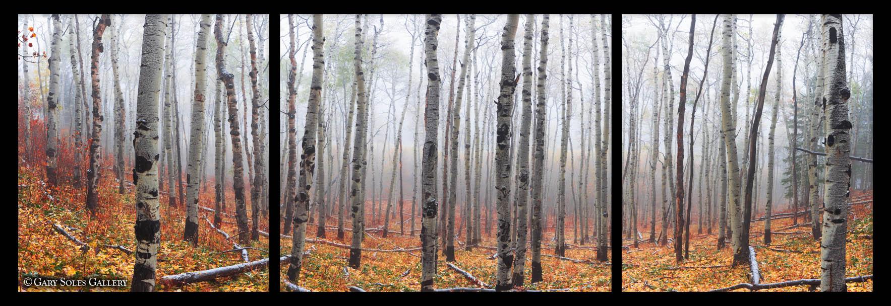Autumn Fog 1_3 Triptych