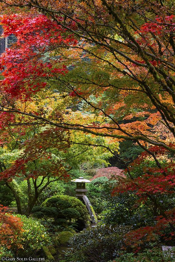 Tranquility Garden 2