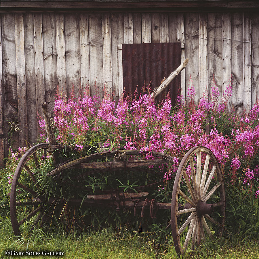 Fireweed Wagon