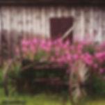 Fireweed Wagon, fireweed, wildflowers, colorado wildflower, wagon wheel, breckenridge