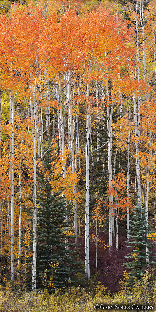 Purgatory Trees Vertical