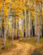 Yellow aspen, McClure Pass, Colorado, Gary Soles photography