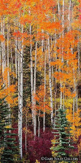 Purgatory Trees Vertical