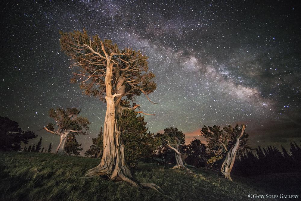 Bristlecone Milkyway