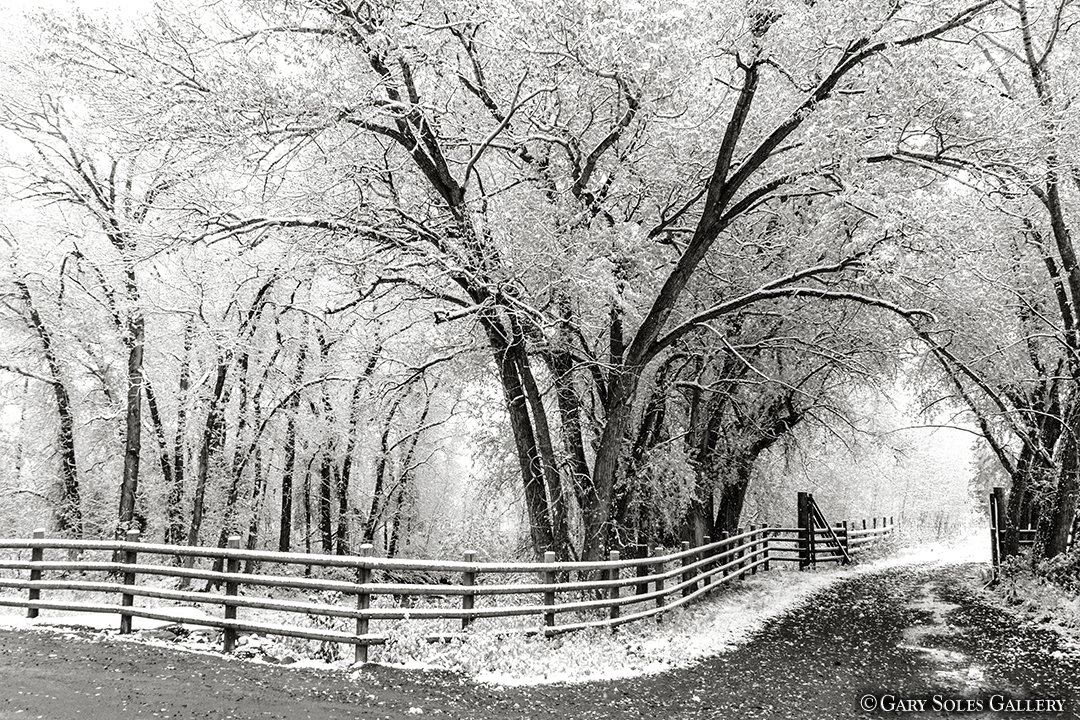 Cottonwood Fence BW