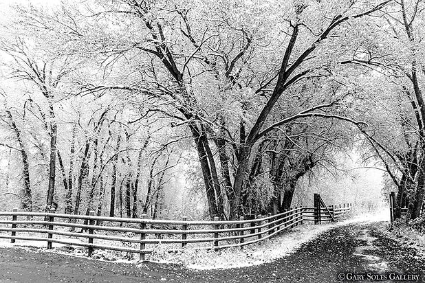 Cottonwood, black and white, gary soles gallery, telluride, colorado, photography