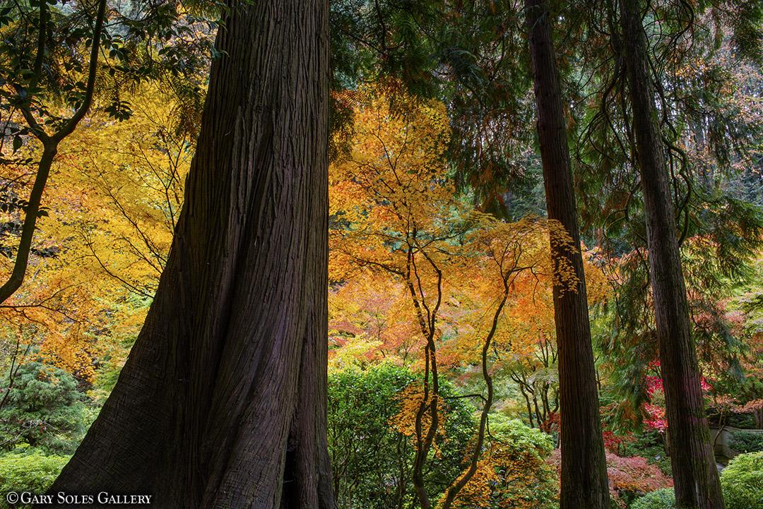3 Cedars