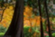 cedars, cedar trees, portland, oregon, gary soles, gary soles gallery, breckenridge