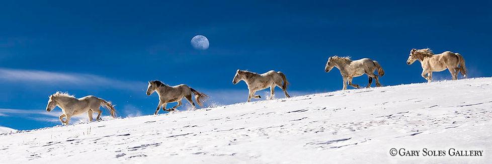 Dream Team, horses, blue sky, moon, snow, park county, colorado snow, gary soles gallery